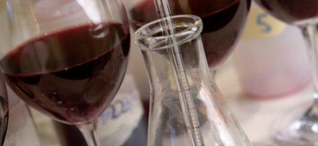 Il brettanomyces nel vino